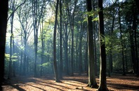 C'est la forêt qui cache l'arbre