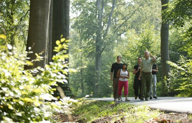 Forêt domaniale de Raismes-Saint-Amand-Wallers 1 - Saint-Amand-les-Eaux